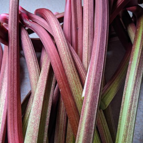 Harvested Rhubarb.png