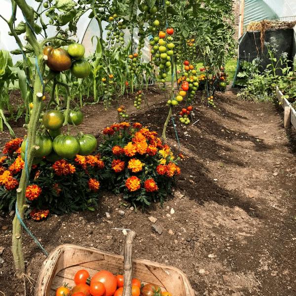 Tomato and basil.png